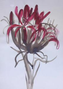 Gymea lilly-Ink,watercolour and brush on paper-76cm x 100cm unframed-David K Wiggs