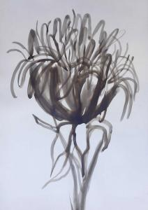 Gymea lilly-Ink and brush on paper-76cm x 100cm unframed-David K Wiggs