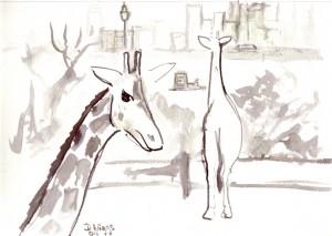 giraffes-I